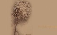 FloresPietMondrian_005 (Visualística) Tags: flores pietmondrian mondrian arte art interpretaciones abstracción paráfrasis versiones análisis flowers flower flor vegetal