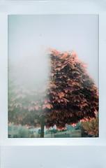 tree (hnt6581) Tags: fuji fujifilm instax instaxmini instaxmini8 instant integral hnt6581 film analog lofi tree fall autumn tinyframes