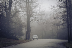Foggy (Dorret) Tags: fog foggy car street damp fall wet humid trees