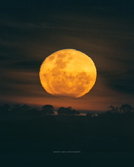 Super moon over rural South Australia (Robert Lang Photography) Tags: supermoon moon space themoon night skt nature orbit colour vertical coomunga southaustralia eyrepeninsula ep australia longexposure robertlangphotography robertlang robertlangportlincoln robertlangaustralia wwwrobertlangcomau