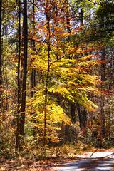 DSC08895-97_HDR (Capt Kodak) Tags: autumn chattahoocheerivernationalrecreationarea fall hdrefexpro2 madefrom3images medlockbridgepark nationalparkservice nikcollectionbygoogle niksoftware photomerge