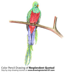 Resplendent Quetzal with Color Pencils (drawingtutorials101.com) Tags: resplendent quetzal birds trogon pharomachrus mocinno animals sketching pencil sketch sketches drawing draw speeddrawing timelapse timelapsevideo coloring color how