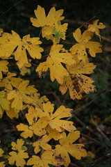 IMG_8884 (Geoff_B) Tags: badockswood bristol walkinthewoods autumn november unprocessed unedited