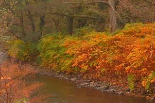 Ebbw River Autumn