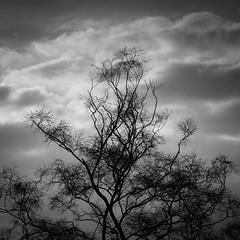 Composition (Peter Apas) Tags: blackandwhitephotography fineartphotography composition tree sky pentaxk5 tamron70200f28dildif