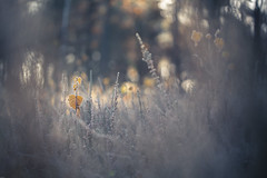 Yellow (Hexilene) Tags: yelow sigma sigma105mm nikon nikonpassion nature nikond750 passion plante paysage
