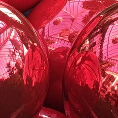 Reflecting the greenhouse (Renee Rendler-Kaplan) Tags: red glass hugeornaments round greenhouse chicagobotanicgarden botanicgarden northshore indoors inside glencoeillinois christmas decor decorations iphone iphoneography reneerendlerkaplan holiday consumerist chicagoreader chicagoist november 2016