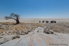 35-Botswana_2016 (Beverly Houwing) Tags: adventure africa baobab botswana desert kalahari kubuisland makadigkadipans quadbike roadtrip saltpan supplies tree