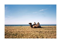 Somewhere In Normandy (Punkroyaltiger) Tags: mju film analog kodak portra camel sea