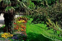 Jardin. (Howard P. Kepa) Tags: jardin palmera hierba