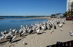 Must 1:30 by Now! (Jocey K) Tags: sky people seagulls pelicans water birds buildings river boats sand labrador australia queensland surfersparadise goldcoast shaodws triptoqueenslandbrisbane