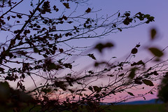 jahodov veer (www.pomme.sk) Tags: sunset sky tree closeup evening strawberry purple hill blury koice jahodna