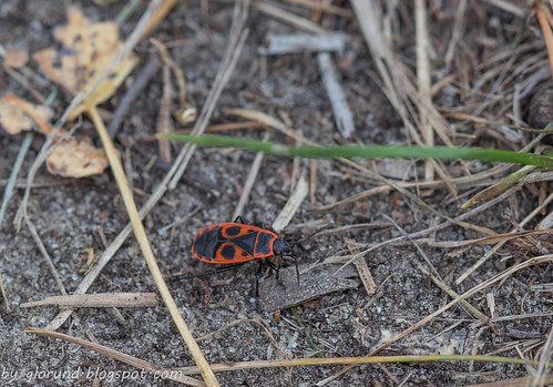 A Firebug