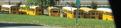 Brewster CSD School Buses (ThoseGuys119) Tags: schoolbus icce icre brewsterny icfe bluebirdallamerican leonardbussales brewstercsd