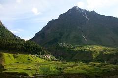 Entre Keylong et Jespa / Valle du Lahaul (Himachal Pradesh) (Charles.Louis) Tags: nature montagne terrasse culture himalaya paysage inde himachalpradesh valle lahaul houblon