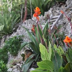Garden bliss (Simone Scott) Tags: flowers islands caymanislands bluff caymanbrac simonescott
