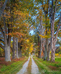 Fall is Here (AP Imagery) Tags: autumn colorful driveway fall gravelroad leaves trees kentucky usa