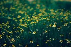 (Sanley Neves) Tags: flowers brazil green nature yellow canon bees bugs bee vsco canont3i vscocam vscofilter