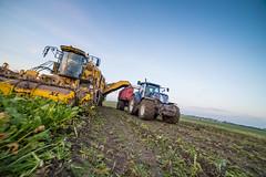 3U4A1536 (Bad-Duck) Tags: vinter mat ropa hst ker betor kvll skrd flt jordbruk lantbruk rstid livsmedel sockerbetor fltarbete livsmedelsproduktion betupptagare