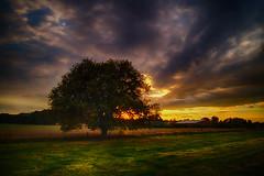 tree on field (radonracer) Tags: niederrhein sunset tree baum geldern abendstimmung boeckelt