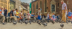 streetlife (stevefge) Tags: krakow poland oldtown squares summer zomer people children kids kinderen boys girls pidgeons birds family play playing fun reflectyourworld