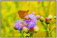 beetle and butterfly 2 (franzisko hauser) Tags: painterly nikond5300 nature distel flowers positive outdoor beetle butterfly plants