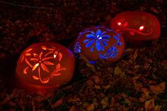 (theleakybrain) Tags: pumpkinnights pumpkin nights mnstatefair p1460094 halloween halloweenwalk minnesota jackolantern jack lantern
