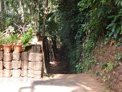 Villages Near Calicut Kerala Photography By CHINMAYA M (1)