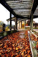 Fallen leaves beneath the protective pergola (Underock) Tags: pergola leaves leafs hespeler autumn d7000 nikon morning pathway november