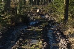 ckuchem-7099 (christine_kuchem) Tags: abholzung baum baumstmme bume einschlag fichten holzeinschlag holzwirtschaft wald waldwirtschaft