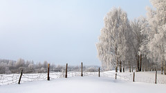cold shackles (Sergey S Ponomarev) Tags: sergeyponomarev canon 70d ef24105f40l nature natura fence landscape paysage paesaggio trees forest cold frost kirov vyatka wjatka russia russie russland north nord winter inverno europe 2016 eos freeze               hff happyfencefriday birchtrees woods birchland crisp