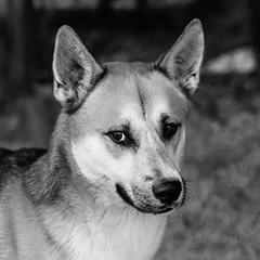 Haus19Nov1600205-Edit.jpg (fredstrobel) Tags: dogs pawsatanta phototype atlanta blackandwhite usa animals ga pets places pawsdogs decatur georgia unitedstates us