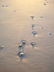 kleine Strandkunst aus Sand, Muscheln, Wind und Sonnenlicht (evioletta) Tags: wangerooge strand sand muscheln spuren