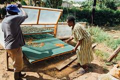 UG1605_226 (Heifer International) Tags: uganda ug