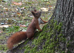 Curious :) (eowina) Tags: squirrel animals park