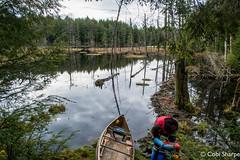 DSC_1244 (Photography by Cobi Sharpe) Tags: cinder may2016 muskoka pokerlake canoetrip