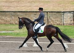 161023_Aust_D_Champs_Sun_Med_4.2_6219.jpg (FranzVenhaus) Tags: athletes dressage australia siec equestrian riders horses performance event competition nsw sydney aus