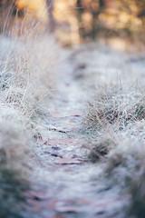 Frozen path (AlistairBeavis) Tags: alistairbeavis alistairbeaviscom cold frost nature path walk winter bokeh dof grass frozen morning chilly
