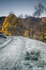 The Golden Light Of A Frosty Morning (.Brian Kerr Photography.) Tags: lakedistrict cumbria lakes langdale langdalepikes quarry morning light golden sonyuk a7rii trees snow frost frozen hoarfrost cold coldmorning photography