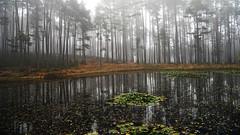 kematener weiher (joachim.d.) Tags: ritten kematen weiher wald forest sdtirol southtirol renon seerosen fog nebel dunst herbst autumn europe europa bltter