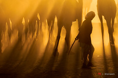 Untitled (Shameem Shah) Tags: rays morning man silhouette legs shutterarts travel india lightplay sunrise camel orange pushkar turban rajasthan villager