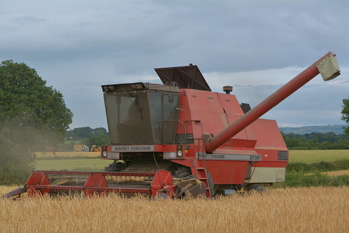 Massey Ferguson 31XP Combine Harvester cutting Winter Barley