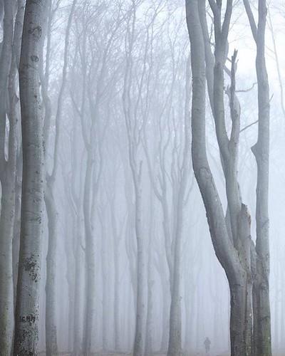 #gespensterwald  #nienhagen  #mecklenburgvorpommern  #wald #nebel #mv  #buchen