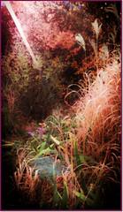Sunshine in the suburbs (CAJC: in the Rockies) Tags: lgg4 cameraphone smartphone garden hss slidersunday ipiccy ipiccyortoneffect ipiccyfieryeffect ipiccylightleakeffect ipiccyframes xeriscaping earlymorningslide lightroom