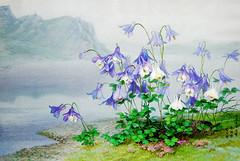 Aquilegia japonica au bord du lac Chonji - Yun Ryo Sun, Hwang I Pun (nokoredstar) Tags: aquarelle peinture coréedunord pyongyang paysage broderie
