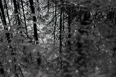 Mirroring - Ilford Delta 400 (magnus.joensson) Tags: sweden swedish skne svedala nikon fm3a voigtlnder nokton 58mm sl ilford delta 400 stand develop 1100 rodinal epson v800