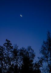 329 - Morning sky (DanielleDeviated) Tags: morning dawn dark sky moon star starlight blue treetops silhouette 3662016 366project