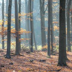 Autumn Forest (Rense Haveman) Tags: hemelseberg nswandeltocht pentaxk5 rensehaveman smcsupertakumar105mmf28