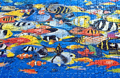 Project 366 - 11/24/2016 - 329/366 (cathy.scola) Tags: project365 project366 puzzle fish jigsawpuzzle