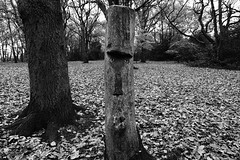 Treeeee (Mr Richie) Tags: panasonic lumix lx5 digital dadsgroup fathers nature streatham common lodge monochrome blackandwhite bw filmgrain